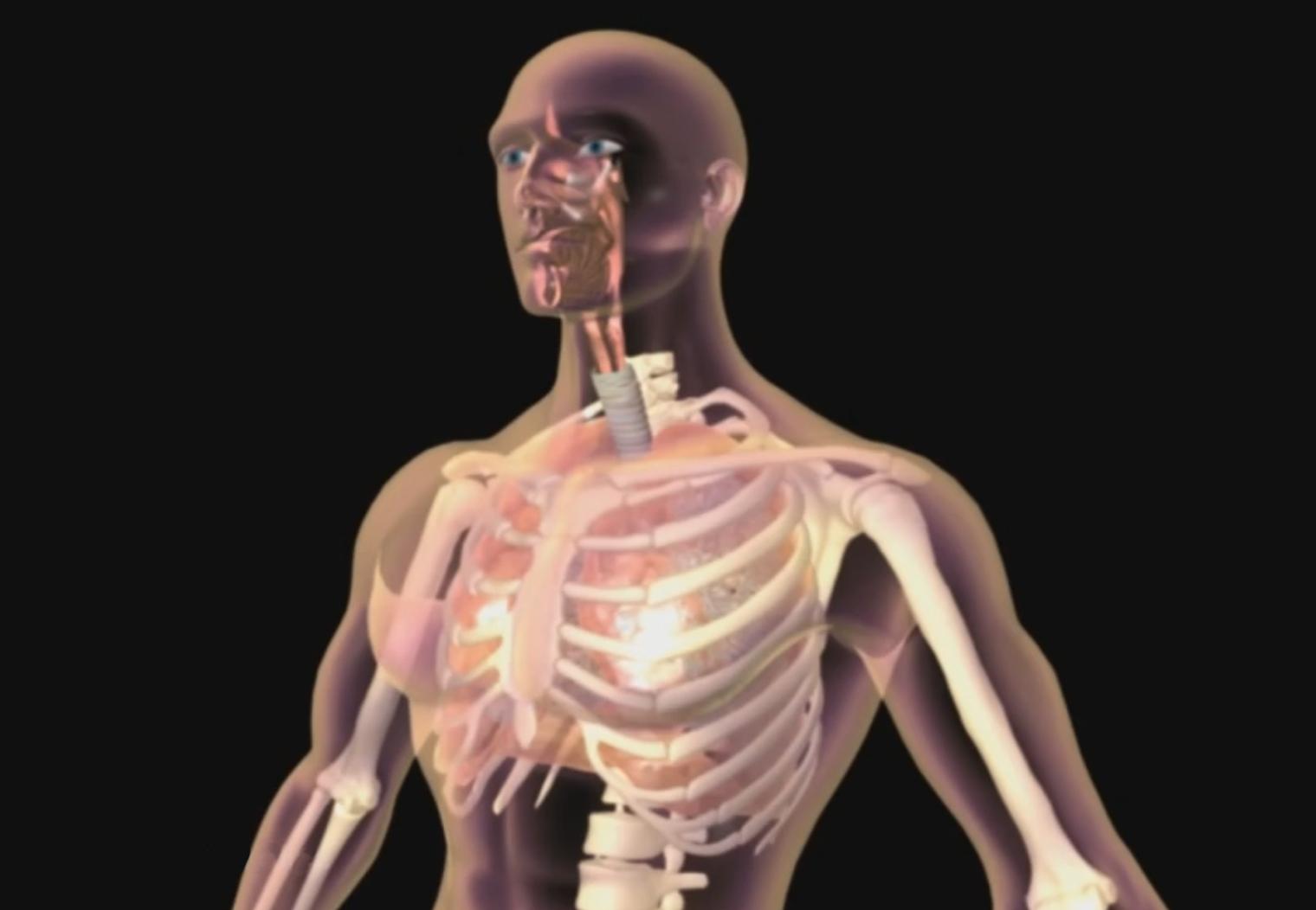Didaktische DVD Unser Körper in 3D - Atmung | Hagemann